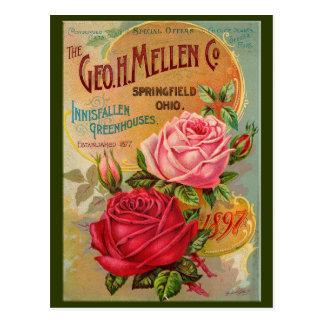 Cartão Postal Catálogo cor-de-rosa