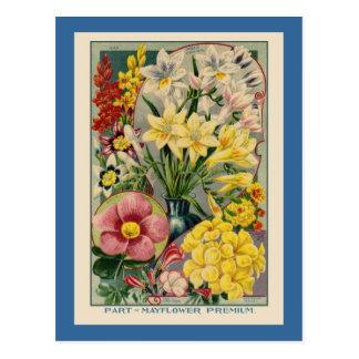 Cartão Postal Catálogo de semente da flor do vintage
