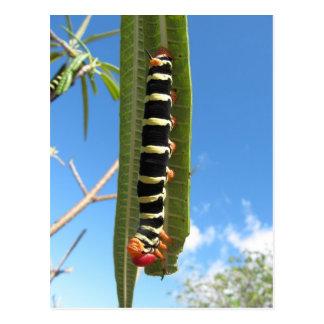 Cartão Postal Caterpillar de escalada