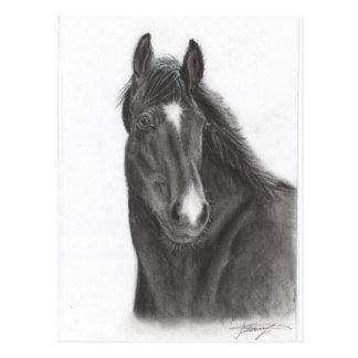 Cartão Postal Cavalo