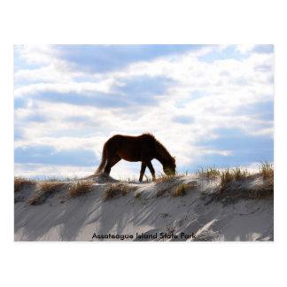 Cartão Postal cavalo 2, parque estadual da ilha de Assateague