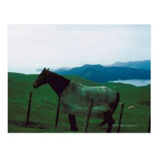 Cartão Postal Cavalo atrás da cerca