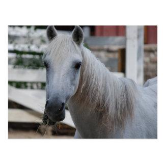 Cartão Postal cavalo branco
