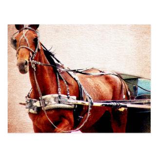 Cartão Postal Cavalo com erros