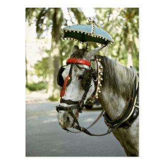 Cartão Postal Cavalo com pára-sol, Madrid, espanha