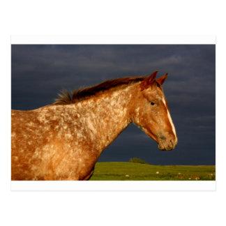 Cartão Postal Cavalo da pradaria