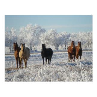 Cartão Postal Cavalo das ovelhas negras