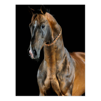 Cartão Postal Cavalo de Akhal-Teke