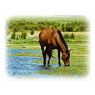 Cartão Postal Cavalo de baía