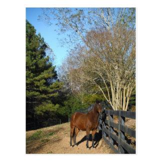 Cartão Postal Cavalo de Brown contra uma cerca