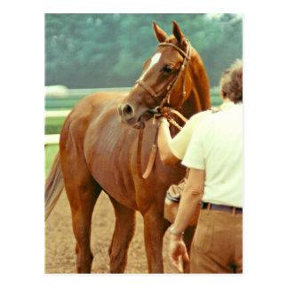 Cartão Postal Cavalo de corrida afirmado 1978 do puro-sangue