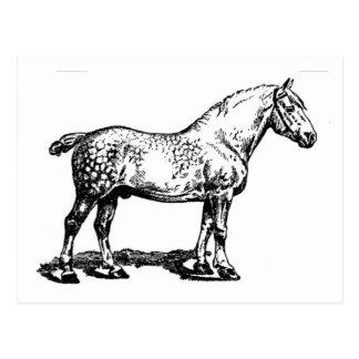 Cartão Postal Cavalo de esboço -- Dappled