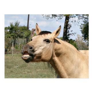 Cartão Postal Cavalo de fala
