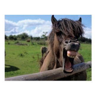 Cartão Postal Cavalo de islândia, islandês
