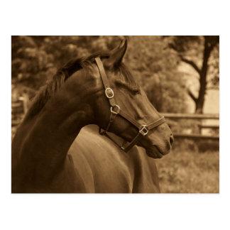 Cartão Postal Cavalo de meu coração