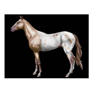 Cartão Postal Cavalo de Nez Perce