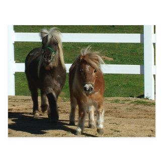 Cartão Postal Cavalo diminuto adorável