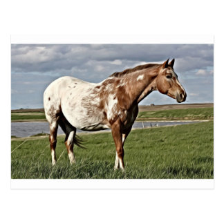 Cartão Postal Cavalo do Appaloosa
