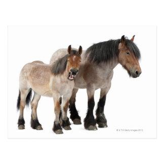 Cartão Postal Cavalo do belga da mãe & do potro