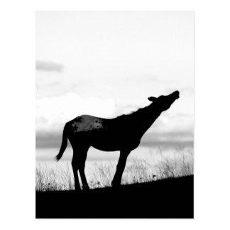 Cartão Postal Cavalo do chacal
