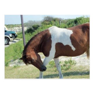 Cartão Postal Cavalo do curvatura