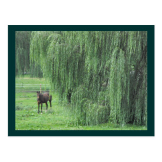 Cartão Postal Cavalo do ~ e um ~ do salgueiro