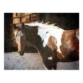 Cartão Postal Cavalo do Pinto