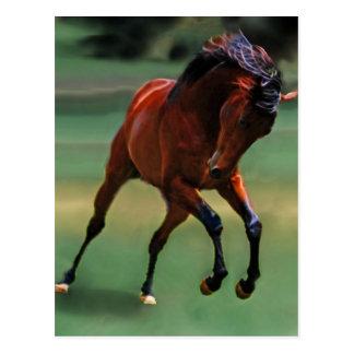 Cartão Postal Cavalo do rodeio para o vaqueiro