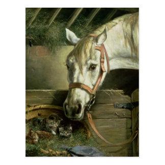 Cartão Postal Cavalo e gatinhos, 1890