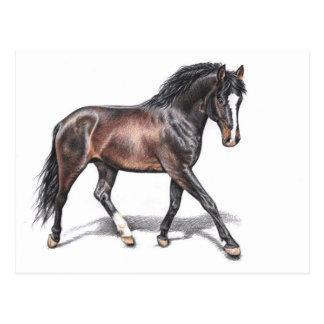 Cartão Postal Cavalo em Trotas - Horse em Motion