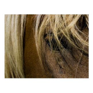 Cartão Postal Cavalo emocional