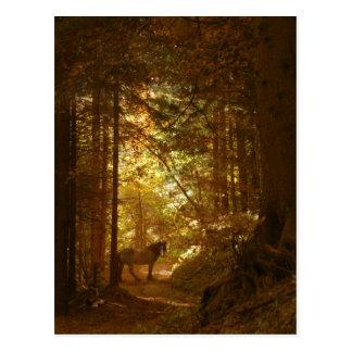 Cartão Postal Cavalo màgica na floresta do Lit