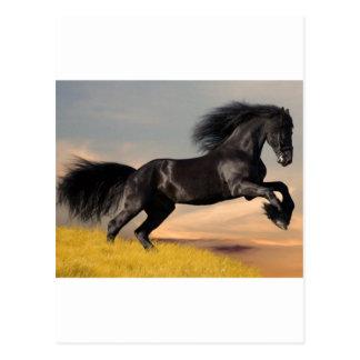 Cartão Postal cavalo preto no deserto