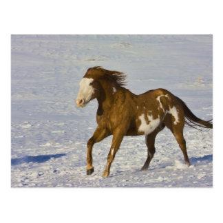 Cartão Postal Cavalo que funciona na neve