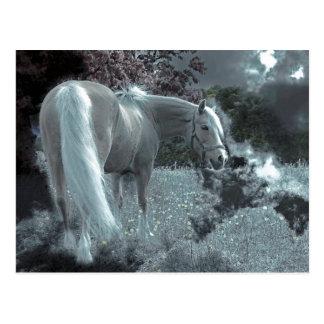Cartão Postal Cavalo que pasta no luar