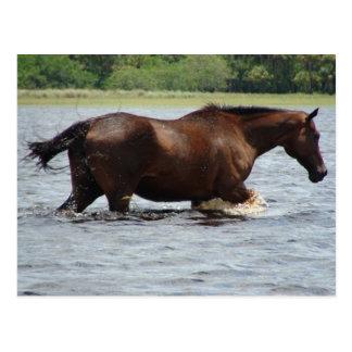 Cartão Postal Cavalo selvagem