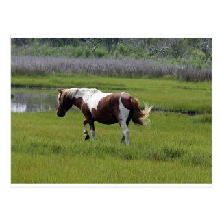 Cartão Postal Cavalo selvagem de Assateague