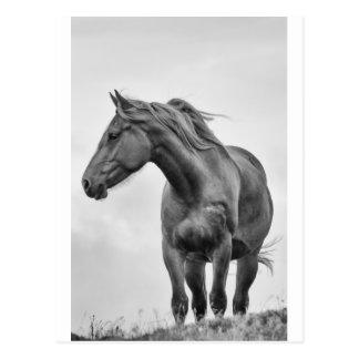 Cartão Postal Cavalo Windblown