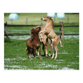 Cartão Postal Cavalos 3