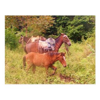 Cartão Postal cavalos Ámérica do Sul