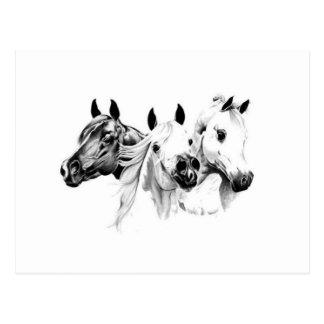 Cartão Postal Cavalos árabes