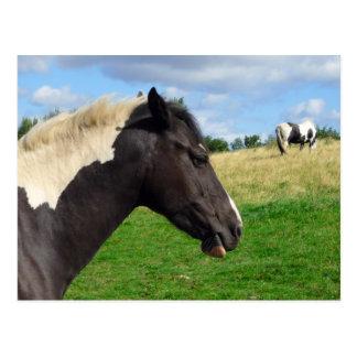 Cartão Postal Cavalos/cartão preto e branco dos pôneis