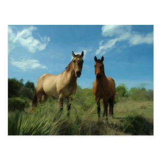 Cartão Postal Cavalos curiosos