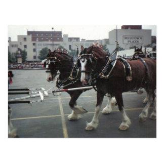 Cartão Postal Cavalos de Clydesdale na plaza do Midtown em