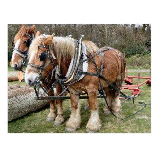 Cartão Postal Cavalos de condado