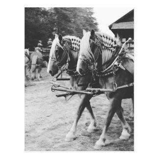 Cartão Postal Cavalos de esboço do funcionamento em preto e