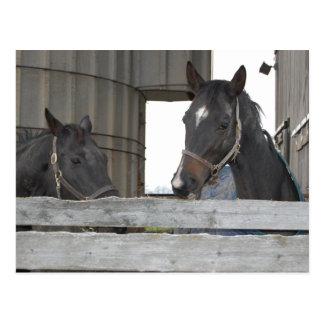 Cartão Postal Cavalos de fazenda no amor