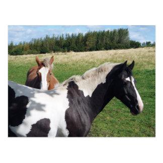 Cartão Postal Cavalos do animal malhado & da castanha