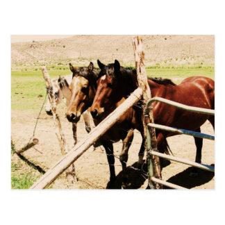 Cartão Postal Cavalos do antimónio