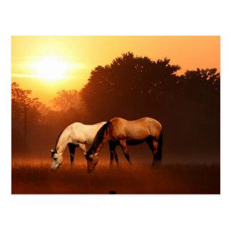 Cartão Postal Cavalos do nascer do sol